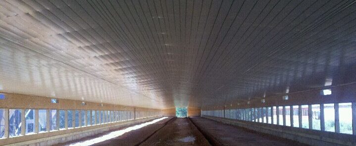 Try-Ply Ceilings installed in poultry barns